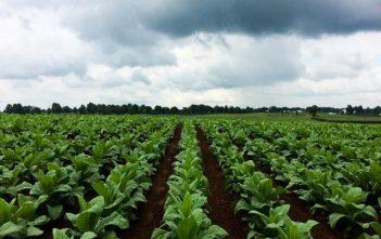 Global General Crop Farming Market