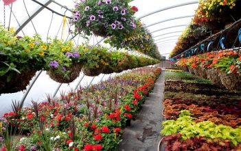 Global Greenhouse and Nursery and Flowers Market