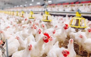 Poultry Manufacturing Global