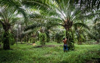 Global Sustainable Palm Oil Market