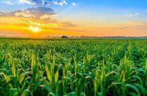 Sweden Agriculture Market