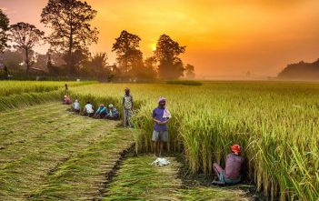 India Agriculture Market