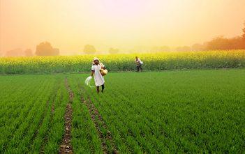 Brazil Agriculture Market
