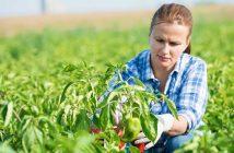 Kazakhstan Agriculture Market