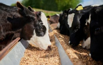 Feed Mycotoxin Binders and Modifiers Market