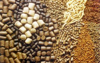 Global Animal Feed Additives Market