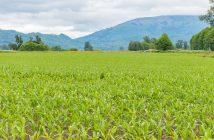 Global Bio Stimulants Industry Market Forecast